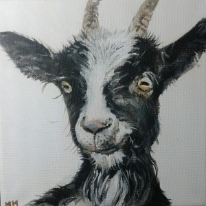 Black White Goat